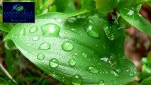 Gutters CT: Green Gutters - About Rheinzink Zinc Gutters