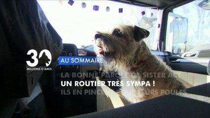 Sommaire émission 30 Millions d'Amis 29/12/2012