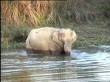 Assam-kaziranga-elephant-mdv-883-2.mp4