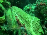 under water-swim over corals 5 .mov