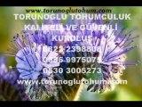 arı otu tohumu satısı,arıcılık arı otu tohumu,ari otu tohumu,arı otu yetiştiriciligi,arı otu ekimi,cesidi arı  otu
