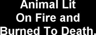 Puppy Lit On Fire And Burned To Death.