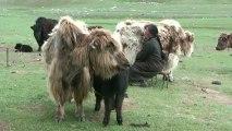 Mongolie 2010