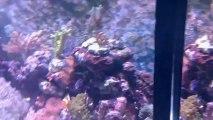Aquarium 430 litres Janvier 2013 (1)