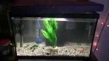 mon nouvelle aquarium de 40 litres