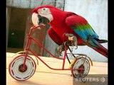 Мото, вело креатив | Moto-led creative. Fhotoclip