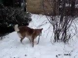Chanelle dans le jardin d'hiver