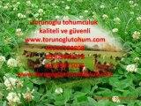 cayır mera tohumu fiyatları2012,cayır mera tohumu cesitleri