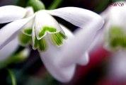Amazing Nature Scenery flowers