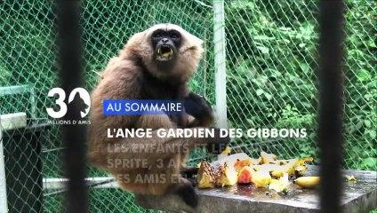 Sommaire émission 30 Millions d'Amis 12/1/2013