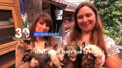 Sommaire émission 30 Millions d'Amis 5/1/2013