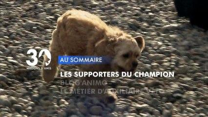 Sommaire émission 30 Millions d'Amis 19/1/2013