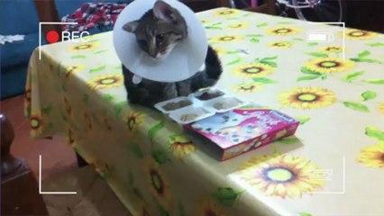 Sterilizzazione di cani e gatti: ascoltiamo il parere del veterinario che ha operato Felpa!