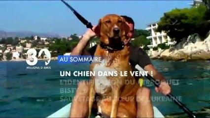 Sommaire émission 30 Millions d'Amis 26/1/2013