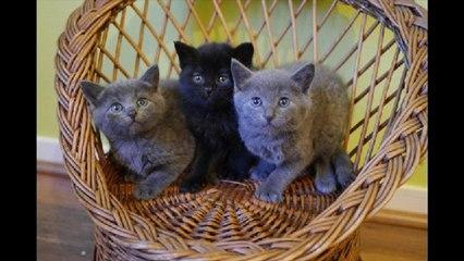 Planning-Chat : Les chats de La Rochelle
