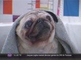 Ouaf Store : Salon de toilettage pour chien et chat (Toulouse)