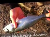 At çek lüfer avı