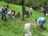 Les variétés de pommes locales : un patrimoine à préserver