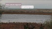 La Camargue et le Parc naturel régional de Camargue / The Camargue and the Camargue Regional Nature Park