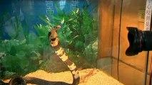 Snake farm: Snakes eat chicken as people eat snake in Taiwan