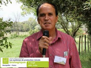 Y. Singh (IARI, New Delhi, India) in Montpellier - First international conference on organic rice production systems