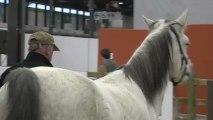 L'équitation comportementale à Jumping l'Expo