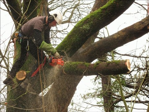 CS Soins aux arbres 2013