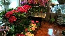 Blomsterforretning Bergen A Jensen Blomster AS