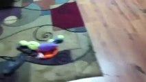 Un Roomba s'occupe d'un caca de chien