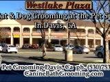 Dog Grooming-Grooming for Pets-Grooming for Cats Davis CA