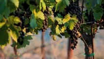 Syrah for cabernet lovers, Napa Valley, Howell  Mountain winery, winemaking philosophy