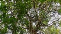 Amazonia, última llamada (09) Naturaleza Protegida