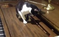 Cat Frightened By Piano