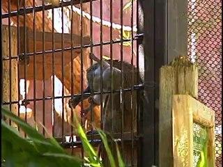 Central Florida Zoo Part 2
