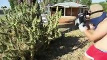 Il saute dans un cactus, mais va vite le regretter !