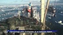 Les baleiniers japonais assurent continuer leur pêche