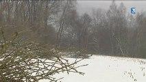 Des idées de campagne 4/5: le bois, une matière première à exploiter pour les communes rurales