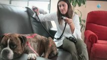 Cuidado de Mascotas - México -Acupuntura Veterinaria México
