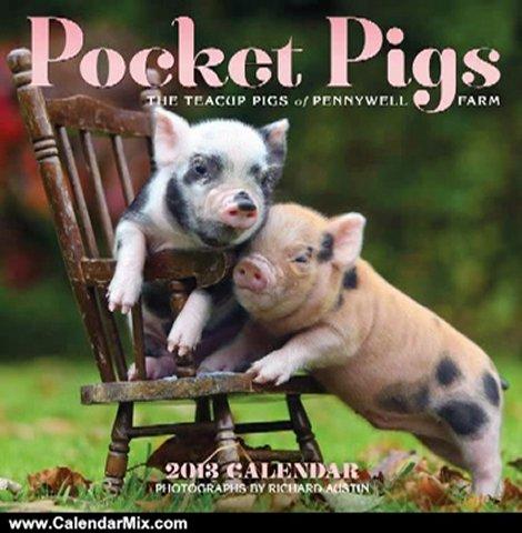 Calendar Review: Pocket Pigs 2013 Wall Calendar: The Teacup Pigs of Pennywell Farm by Richard Austin