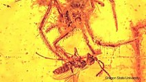One of the World's Oldest Animal Fossils Discovered