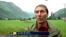 Pas de lâcher d'ours dans les Pyrénées cette année