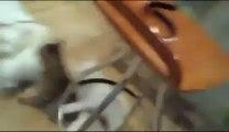 Un chat lynché par une meute... de chiots !