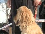 Compétition de sauvetage de chiens en avalanche (Savoie)