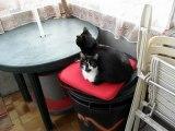 Gasper(noir) et Gwendy(noir et blanche) Angel( le seul chat different des autres chats RIP)