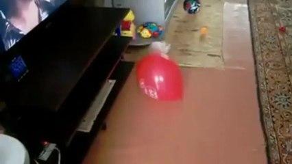 """Coelho a """"brincar"""" com um balão tem experiência traumática"""