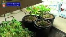 San Giovanni Rotondo (FG) - Coltivava marijuana in un casa, arrestato (04.03.13)