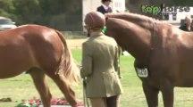Led Sport Horse & Pony - Royal Melbourne Horse Show 2013