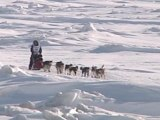 Day and night Nome welcomes Iditarod mushers