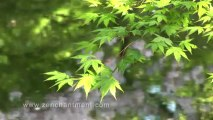 Dailymotion & Zen Garden - Koi Pond (Excerpt from DVD by Zenchantment ...