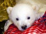 Raw: Meet Kali, Alaska Zoo's littlest polar bear
